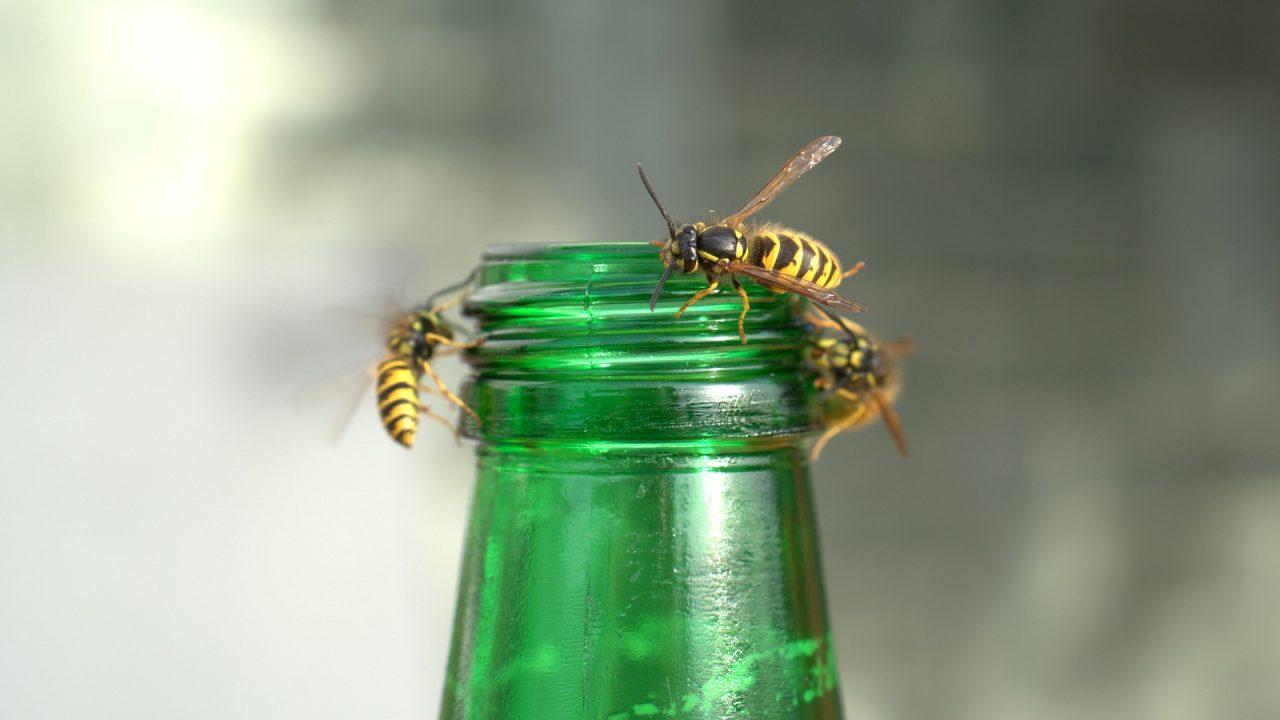 bijenplaag